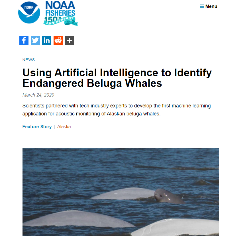 Using Artificial Intelligence to Identify Endangered Beluga Whales